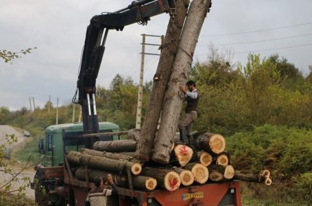 اختلاف اوقاف و منابع طبیعی بر سر درختان صنعتی در بابل